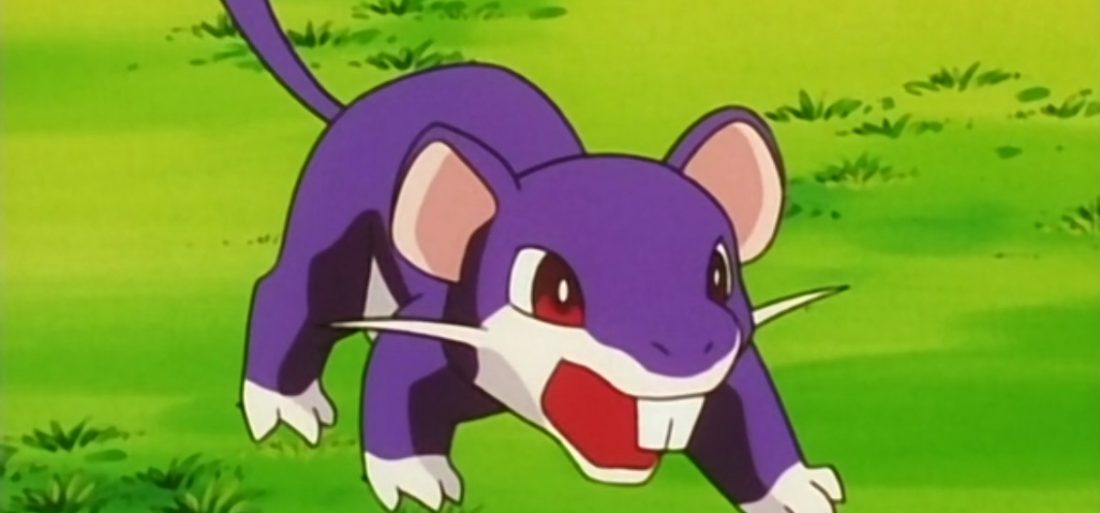 Rattata Evolution